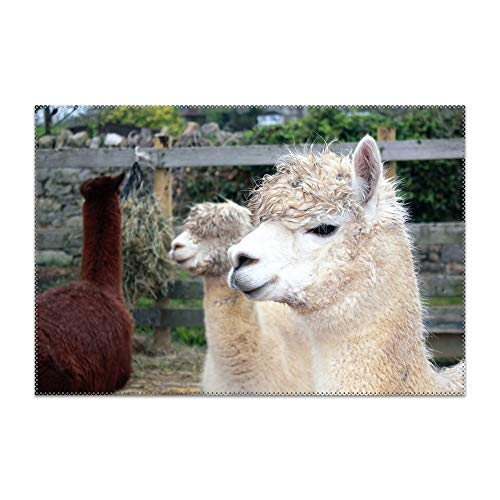 GREDBH Cute Llama Placemat for Dining Table Heat Resistant Wipeable Non-Slip ()