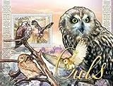 Uganda – Owls, Verreaux's Eagle-Owl, Barn Owl, Short-eared Owl 21D-016