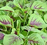 CHINESE SPINACH -EDIBLE RED HERB LEAF AMARANTH (Amaranthus gangeticus) 100 Seeds