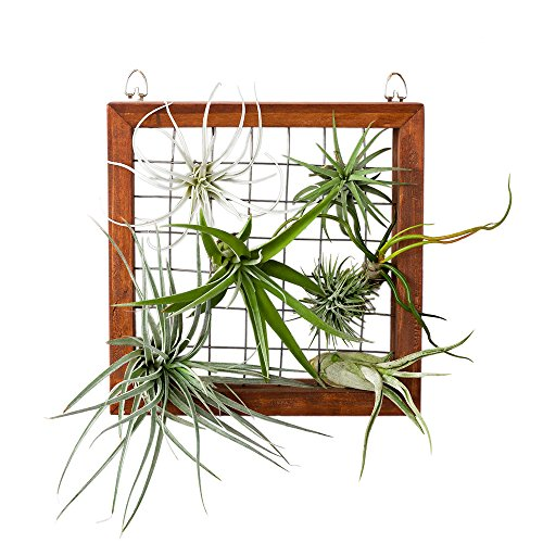 Mkono Air Plant Frame Tillandsia Wall Display, 7 7/8 Inch - Square Plant Containers