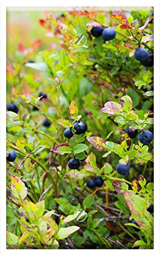 (Single-Gang Blank Wall Plate Cover - Blueberries Heather Blueberry Plant Blue Food)