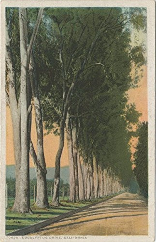Vintage Postcard Print | Eucalyptus Drive, California, 1898 | Historical Antique Fine Art Reproduction (Fine Art Drive)