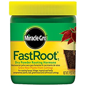 Miracle-Gro FastRoot Dry Powder Rooting Hormone Jar, 1-1/4-Ounce