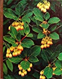 img - for The Time-Life Encyclopedia of Gardening: Flowering Shrubs. book / textbook / text book