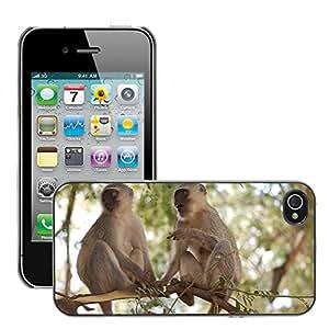 Super Stella Slim PC Hard Case Cover Skin Armor Shell Protection // M00149838 Vervet Monkeys Apes Animal Wildlife // Apple iPhone 4 4S 4G
