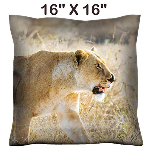 Liili 16x16 Throw Pillow Cover - Decorative Euro Sham Pillow Case Polyester Satin Soft Handmade Pillowcase Couch Sofa Bed Image ID: 24709525 Close up of Lioness with a Nose Injury in Serengeti Photo ()