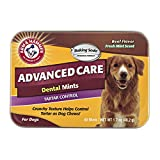 Arm & Hammer Advanced Care Tartar Control Dental Mints Dog Treats, Beef Flavor