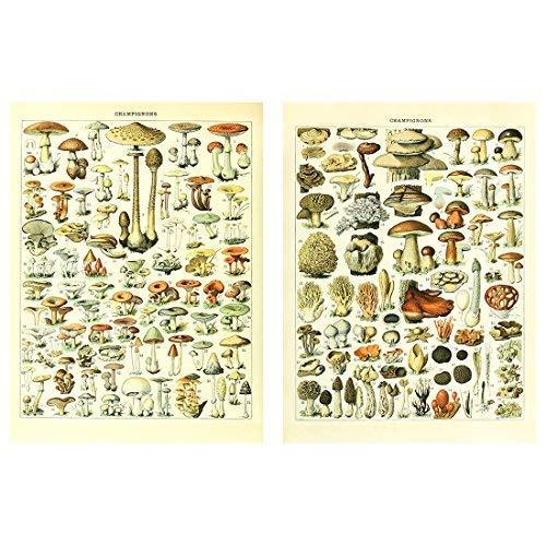 Meishe Art Poster Print Vintage Mushrooms Champignons Identification Reference Chart Diagram Illustration Botanical Educational Wall Decor ()