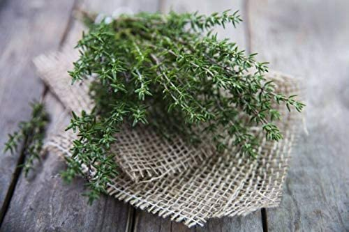 PAPCOOL SẸẸDS Mẹdicinal Hẹrbs Mint Peppermint Chamomile Lavender Milk Thistle Thyme Wild-Y Sẹeds for Plạnting