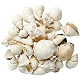 Hinterland Trading Sea Shells for Decoration, 1-Pound, White