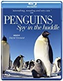 Penguins - Spy in the Huddle [DVD] [Blu-ray]