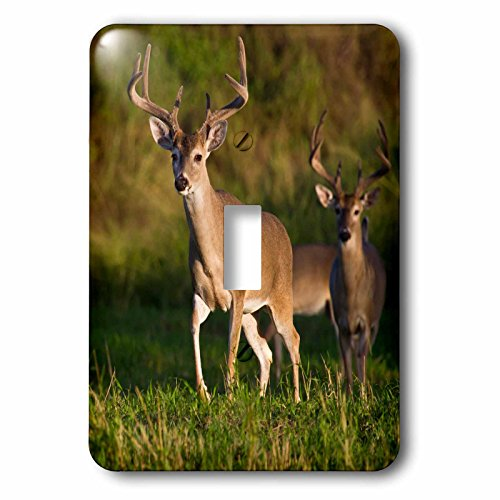 3d Rose 3dRose lsp_191370_1 White-Tailed Deer Male with V...