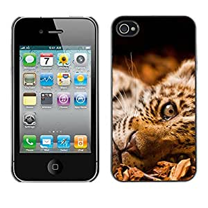 Hot Style Cell Phone PC Hard Case Cover // M00100730 felineleopards animals // Apple iPhone 4 4S