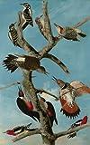 Artifact Puzzles - Audubon Woodpeckers Wooden Jigsaw Puzzle