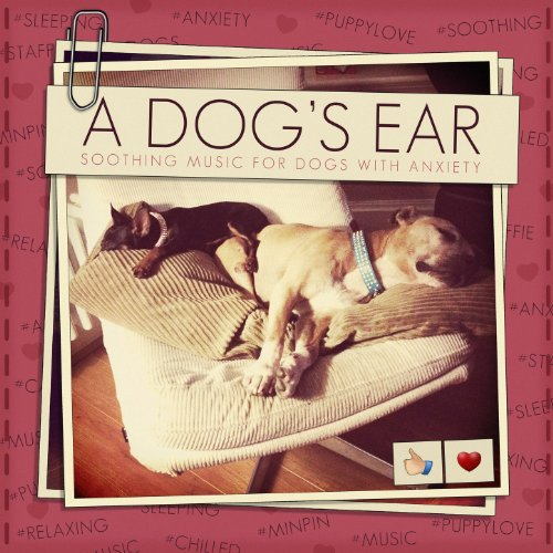 A Dog's Ear : Soothing Music f...