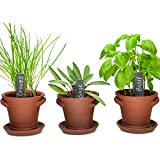 pot growing kit - Window Garden Rustic Charm Herb Trio Kit with Planter Pots, Slate Markers, Fiber Soil, Germination Bags, Basil, Chive and Sage Seeds. Complete and Easy to Grow on Indoor Kitchen Windowsill.