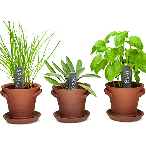Window Garden Rustic Charm Herb Trio Kit with Planter Pots, Slate Markers, Fiber Soil, Germination Bags, Basil, Chive and Sage Seeds. Complete and Easy to Grow on Indoor Kitchen Windowsill. - Sage Herb Plant