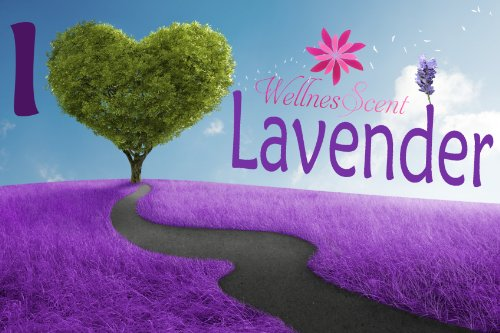 Lavender Essential Oil 100% Pure & Therapeutic Grade. Used in Aromatherapy & Massage - 10 ml Lavandula Officinalis