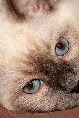 Such A Sweet Face Darling Ragdoll Kitten Up Close Pet Journal