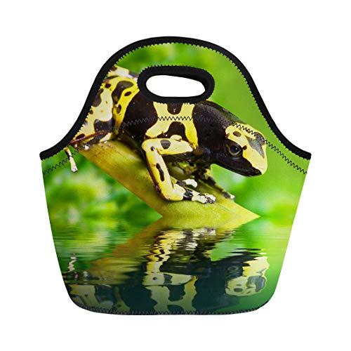 Semtomn Neoprene Lunch Tote Bag Green the Poison Dart Frog Dendrobates Leucomelas in Rainforest Reusable Cooler Bags Insulated Thermal Picnic Handbag for - Green Frog Dart Poison