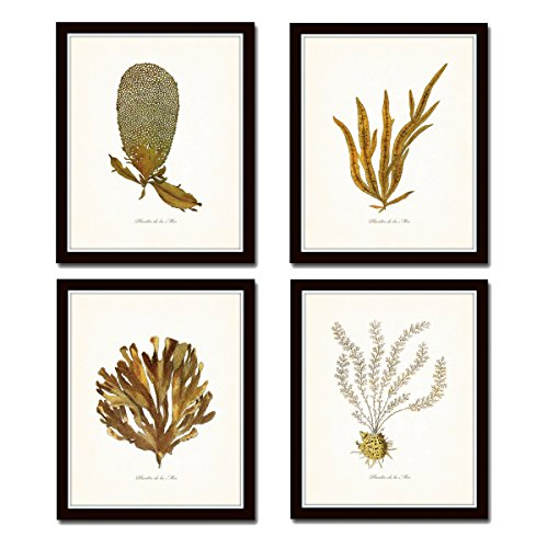 Maison 2 Light (Plants of the Sea Print Set No.2 - Set of 4 Giclee Fine Art Prints - Unframed)