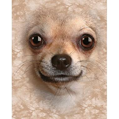 Chihuahua Dog Breed Fleece Throw Blanket by LTD