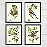 Bird Print Set of 4 Prints Antique Art Beautiful Colored Colorful Natural Science Summer Garden Nature Fruit Berries Tree Branch Leaf Home Room Wall Decor Unframed CJ