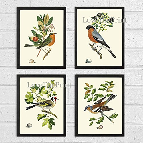 Bird Print Set of 4 Prints Antique Art Beautiful Colored Colorful Natural Science Summer Garden Nature Fruit Berries Tree Branch Leaf Home Room Wall Decor Unframed (Gourmet Settings Frame)