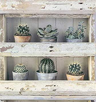 Papier Peint Dessin De étagères Avec Cactus Natural Look3 95013 36