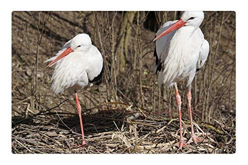 Tree26 Indoor Floor Rug/Mat (23.6 x 15.7 Inch) - Stork White Stork Rattle Stork Bird Adebar Storks 2