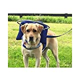 Muffin's Halo Guide for Blind Dogs, Large, (Blue)