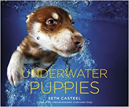 Image result for underwater puppies