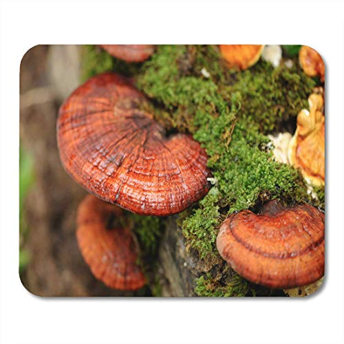 Mouse Pad Red Reishi Lingzhi Mushrooms Green Ganoderma Lucidum Fungus Organic Mousepad for Notebooks,Desktop Computers Mouse Mats, Office Supplies
