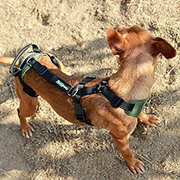 Arnés canino Integral - XL: Amazon.es: Productos para mascotas