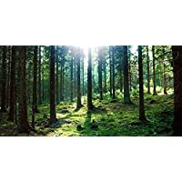 GladsBuy fresh air 20 x 10 Computer Printed Photography Backdrop Forest Theme Background ACP-407
