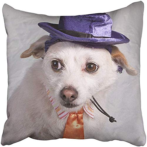 Throw Pillow Cover Polyester 18X18 inch Orange Dog Chihuahua in Halloween Costume Purple Boss Boss Angry Domesticated Gey Hat Mans Two Sides Decorative Square Print Pillowcase for Home ()