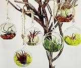 6 Round Hanging Glass Orbs Plant Terrarium Flat Bottom 4 Inch Glass Candles Tea Light Holders Indoor Fairy Gardens Accessories