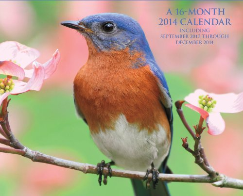 Backyard Birds of the South 2014: 16 Month Calendar - September 2013 through December 2014