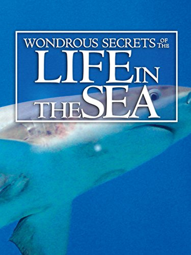 wondrous-secrets-of-the-ocean-realm-life-in-the-sea