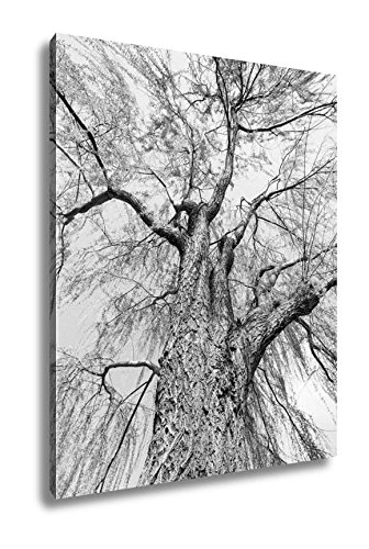 Ashley Canvas Weeping Willow In Potomac Park Washington Dc, Wall Art Home Decor, Ready to Hang, Black/White, 20x16, AG5441830