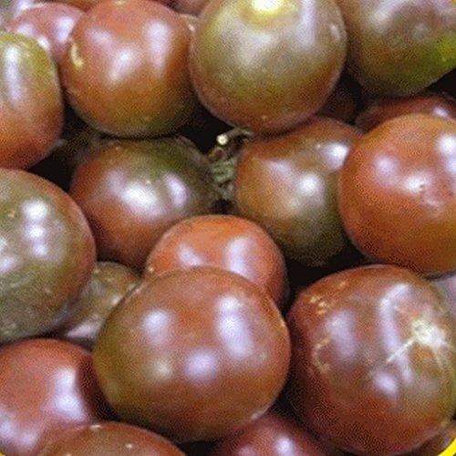 tomato seeds siberia - 3