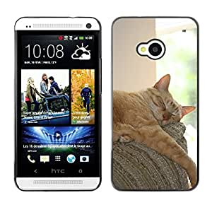 Super Stellar Slim PC Hard Case Cover Skin Armor Shell Protection // M00126183 Cat Sleepy Adorable Ginger Pet Cute // HTC One M7
