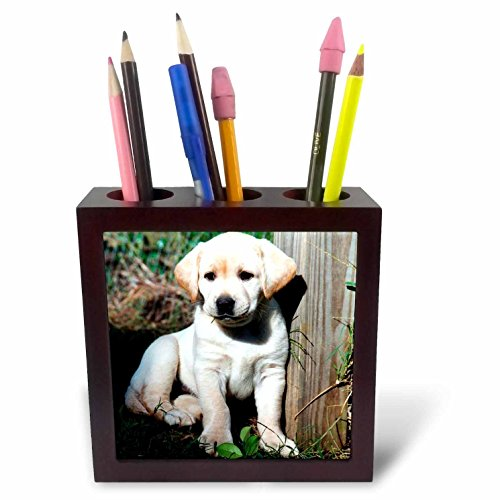 Dogs Labrador Retriever - Cute Yellow Lab Puppy - 5 inch tile pen holder (ph_969_1)