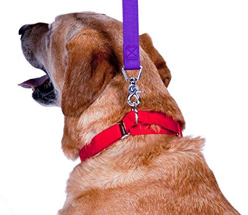 Image of GoGo Pet Products GoGo 3/4-Inch Martingale Dog Collar, Medium, Red