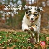 Australian Shepherd Puppies 2013 7X7 Mini Wall