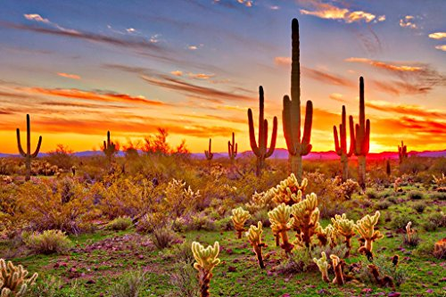 Colorful Sunset with Saguaro Cactus Sonoran Desert Arizona Photo Art Print Poster 36x24 inch ()