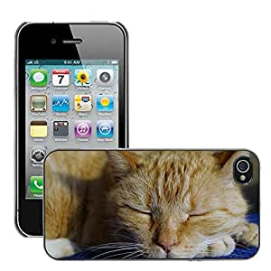 Hot Style Cell Phone PC Hard Case Cover // M00109147 Cat Rest Recreation Siesta Pet // Apple iPhone 4 4S 4G