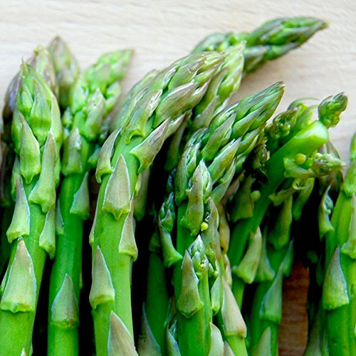 Mary Washington Asparagus Vegetable Plants Viking Crowns Roots Bare Root 250 Ea by Grower's Solution (Image #1)
