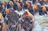 Buffalo Stampede - Giclee signed limited edition
