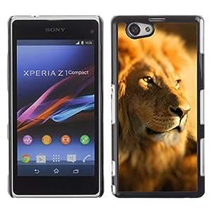KOKO CASE / Sony Xperia Z1 Compact D5503 / paquete de líder selva león áfrica sabana / Delgado Negro Plástico caso cubierta Shell Armor Funda Case Cover